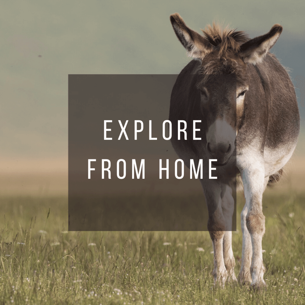 Button to click to learn how to explore Italy virtually from home.