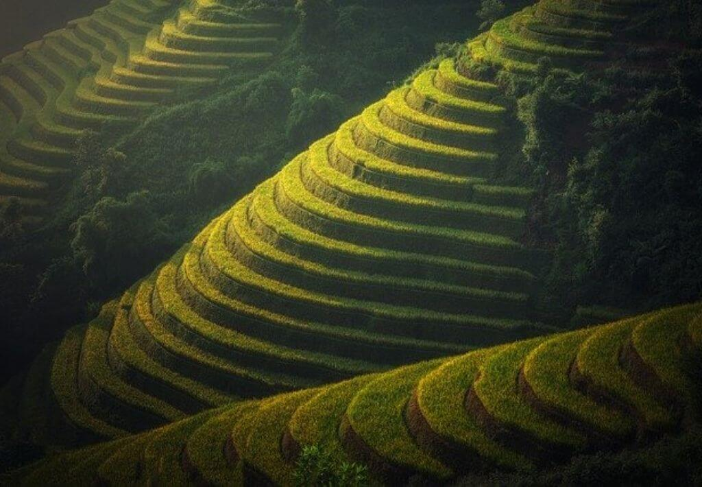 Green rice field in Ubud Bali.