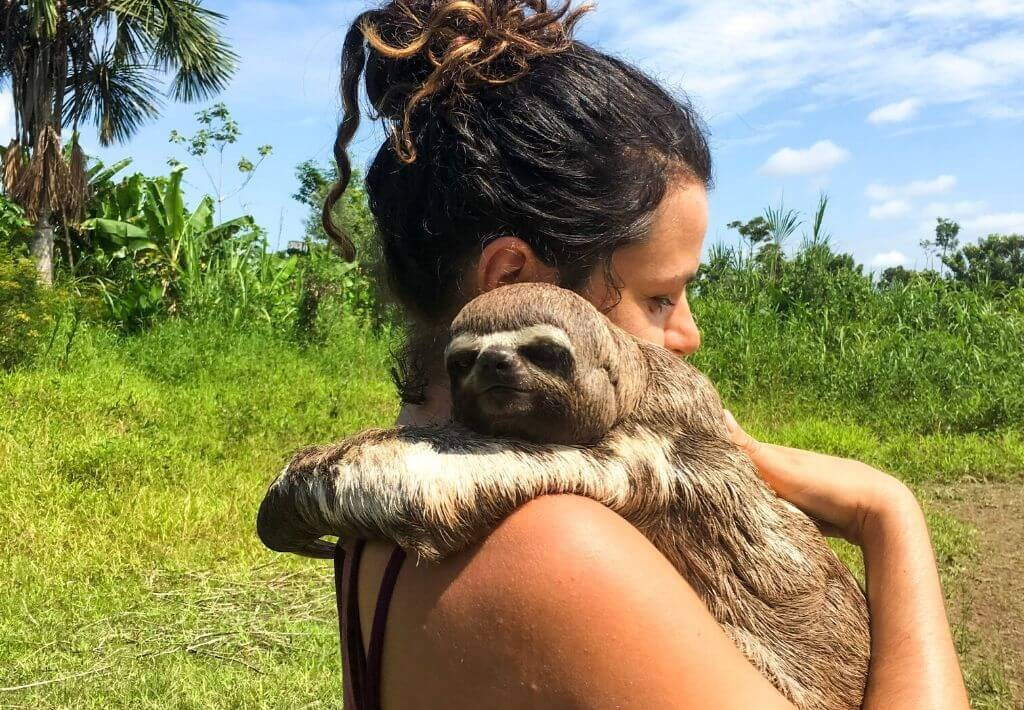 Girl on an adventure in the Peruvian Amazon. Holding a sloth monkey who has his arms around her shoulders and his eyes open. The background is the Peruvian Amazon with green grass and palm trees. The sun is shining bright.