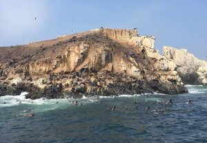 Swimming with Sea Lions in Peru: A Complete Guide