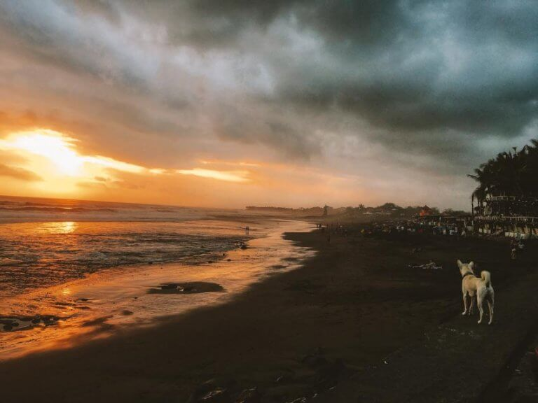 Dog on a beach in Bali Indonesia during the sunset