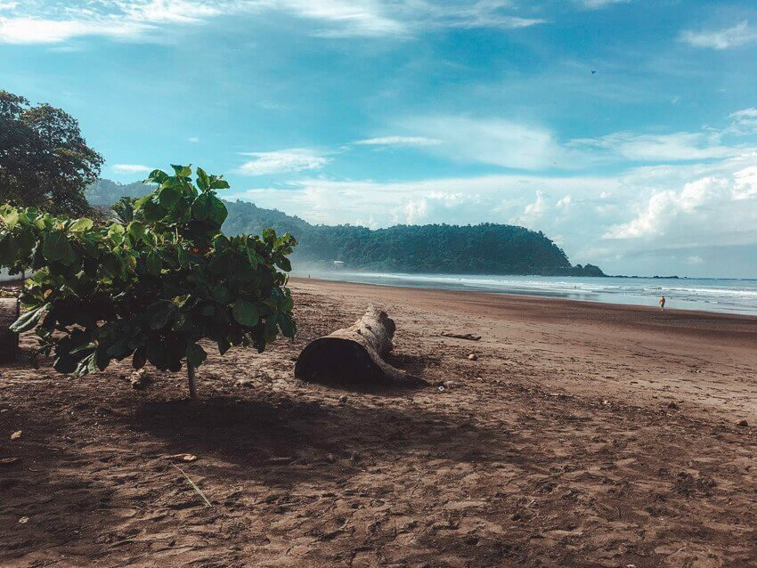 Jaco Beach in Costa Rica. Picture of a tree log, bush, sand and the ocean.