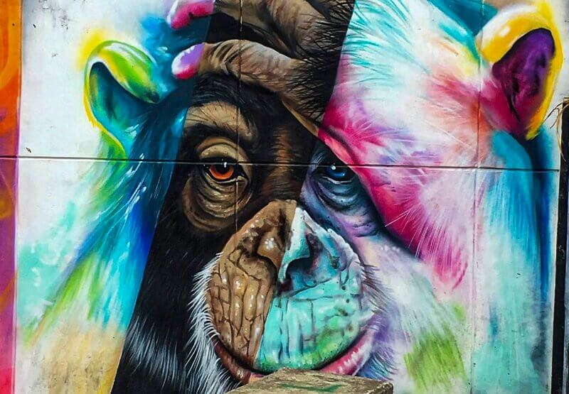 Picture of street art in Comuna 13. This picture is of a Monkey with his hand on his head.