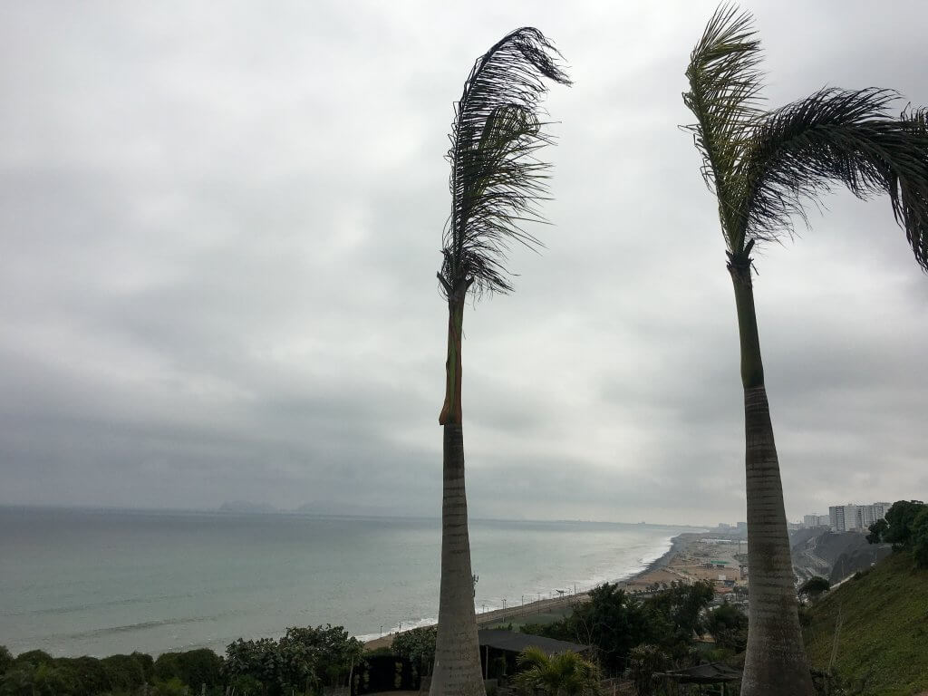 Ocean in San Isidro, Lima, Peru. Two palm trees in front of picture blowing in the wind. Ocean in background.